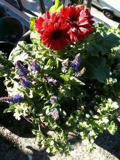Patriotic Flowerpots fly their colors all summer long! http://thestir.cafemom.com/home_garden/122498/patriotic_flowerpot_will_fly_its?utm_medium=sm_source=pinterest_content=thestir