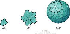 virus T=2 icosahedral capsid protein