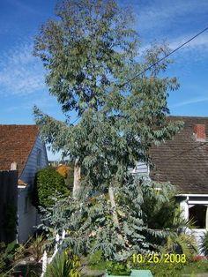 Unusual Plants, Yard, House Styles, Planting, Home Decor, Patio, Plants, Decoration Home, Room Decor