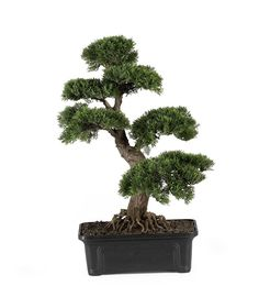 indoor bonsai tree for sale