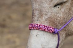 How to make a braided paracord noseband for a horse halter. Step by step instructions. - YouTube
