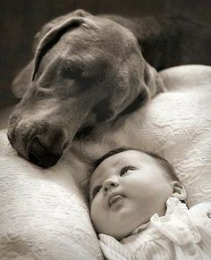 Oh my goodness, I have a weimaraner! I hope she is this sweet when we have a little one :) Weimaraner, Vizsla, Love My Dog, So Cute Baby, Cute Babies, Baby Dogs, Dogs And Puppies, Doggies, Baby Baby