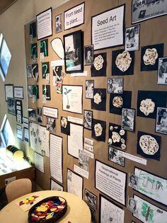 Documentation board for seed art Learning Stories, Play Based Learning, Project Based Learning, Learning Centers, Reggio Emilia Classroom, Reggio Inspired Classrooms, School Displays, Classroom Displays, Eyfs Classroom