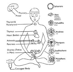 feralwitchhchild: Currently studying how the chakras correspond to various parts of the endocrine system and how to stimulate them though the 5 Tibetan Rites of Rejuvenation whilst listening to some old bollywood music from the lolol Kundalini Yoga, Yoga Meditation, 5 Tibetan Rites, Body Fluid, Endocrine System, Learn Chinese, Spiritual Development, Body Systems, Holistic Healing