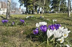 Spring in Turku, Finland. | qandvictoria.wordpress.com