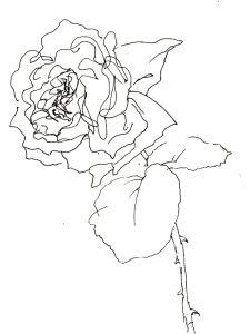 Rose Nr. 108