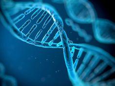 Estudo da Universidade de Cambridge revela que compartilhamos 145 genes com vírus, bactérias e fungos.
