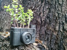urban fossil camera concrete fossil planter or other by elswago, $49.95