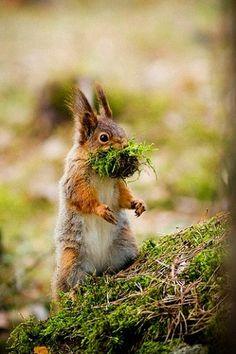 Ardilla / Eichhörnchen