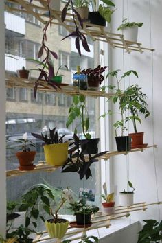 Hanging wooden trellises that make an easy indoor garden