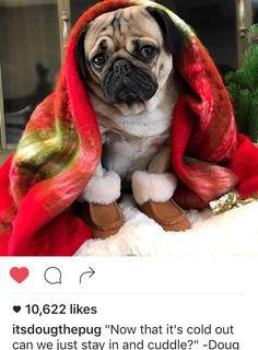 Doug The Pug, Lollapalooza, Pugs, Baby Uggs, Pug Life, Cuddling, Dog Breeds, Cute Animals, Cosmopolitan