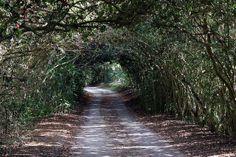 Jungle Gardens at Avery Island, Louisiana   Louisiana culture