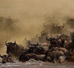 Migration on the Serengeti