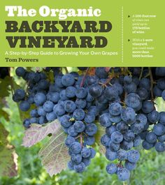 Free Kindle The Organic Backyard Vineyard: A Step-by-Step Guide to Growing Your Own Grapes, Author Tom Powers How To Store Grapes, How To Grow Grapes, Backyard Vineyard, Grape Vineyard, Grape Plant, Wine Vineyards, Thing 1, Organic Gardening Tips, Vegetable Gardening