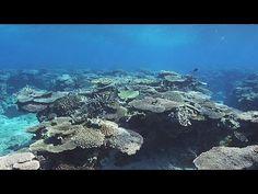 ▶ 奄美大島 珊瑚礁の海 Coral Reef Sea of AMAMI ( Shot on RED EPIC ) - YouTube
