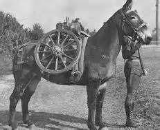 Probably WW1 Service Mule