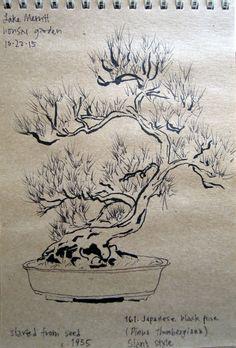 Bonsai Kengai Kask Da Cascade Style Bonsai Pinterest Bonsai Bonsai Art And Ikebana