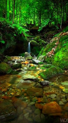 nature, stream, water, green, gold,