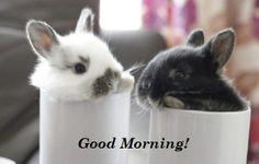 Good Morning! (05/25/14)