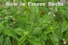 How to Freeze Herbs :: PocketChangeGourmet.com
