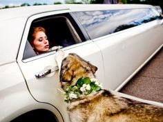 Love this shot. Charming idea for floral collar for wedding-party dogs.