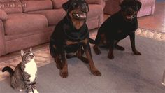 Just three dogs doing tricks : aww