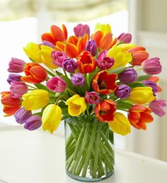 My favorite flower, Tulips. Love all the colors and styles!