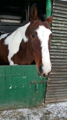 Najlepszy koń. Chani. ❤