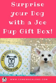Surprise your Dog with Joe Pup + Unboxing & Coupon Code   - ComeWagAlong.com #ad