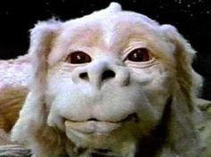 The Luck Dragon from Never Ending Story looks just like Bella! Movies Showing, Movies And Tv Shows, Narnia, Dragons, The Neverending Story, Ex Machina, My Childhood Memories, School Memories, Ol Days