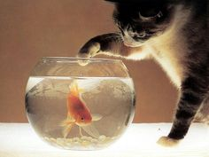 ¿Eres Nemo?