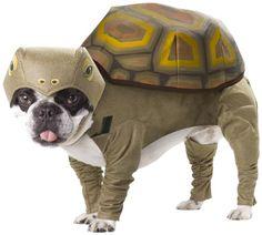 Animal Planet PET20102 Tortoise Dog Costume, Medium - http://www.thepuppy.org/animal-planet-pet20102-tortoise-dog-costume-medium/