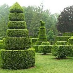 Topiaries! What fun they can be in any garden. Just add imagination and cutters!