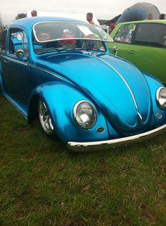 Bluuuuueeee Beetle