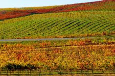 Visit Napa Valley in the fall and join in a crush party!