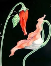 Pink floyd the wall gerald scarfe imgenes pinterest pink the moving flowers from the wall pink floyd mightylinksfo