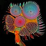 The Extraordinary Details of Tiny Creatures Captured with a Laser-Scanning Microscope by Igor Siwanowicz