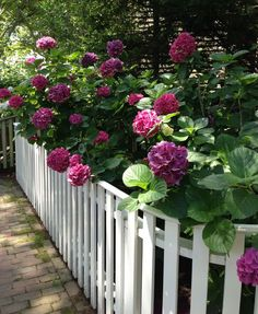 top rail on white picket fence - splendid