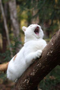 """Aah-eeh-ah-eeh-aaaaaah-eeh-ah-eeh-aaaaah!"" (Tarzan yell - kitty style)"