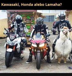 Best Memes, Funny Memes, Polish Memes, Bike Quotes, Good Mood, Puns, Animals And Pets, Fun Facts, Avengers