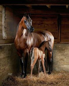Horse family portrait