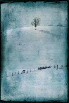 one hill tree #2 by jamie heiden, via Flickr