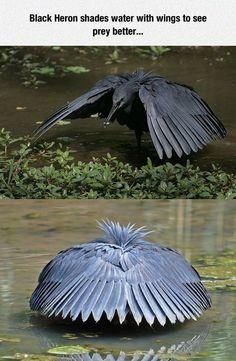 The Bird's Trap