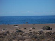 Punta Tombo (Chubut)
