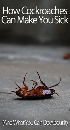 Cock roaches ab workout