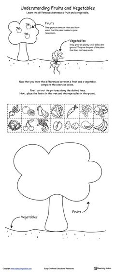 Help your child understand the differences between a fruit and a vegetable with this science printable activity.