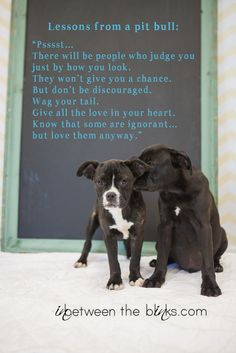 Lessons from a pit bull.