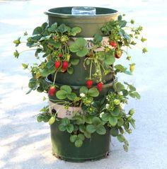 Strawberry Planter Idea