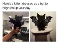 17 Of The Cutest And Most Adorable Kitten Memes To Brighten Your Day #funny #picture