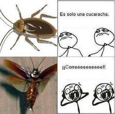 es solo una cucaracha... ¡corre!, Fuck Yeah, memes, Humor, Imagenes graciosas, ... http://www.xdlol.com/2012/07/es-solo-una-cucaracha.html